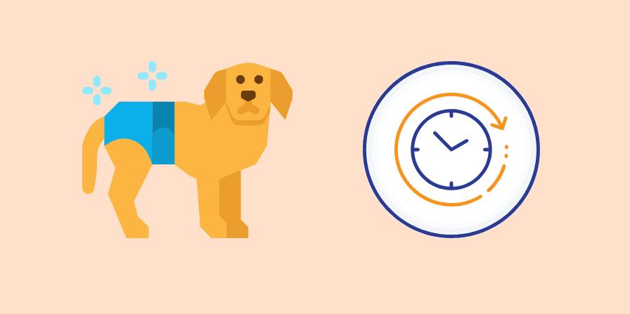 おむつをはいている犬と時間の経過をあわわす時計がある