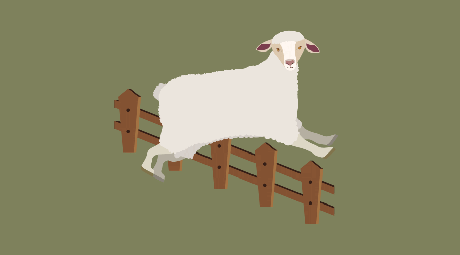 羊が低い柵を飛び越えている