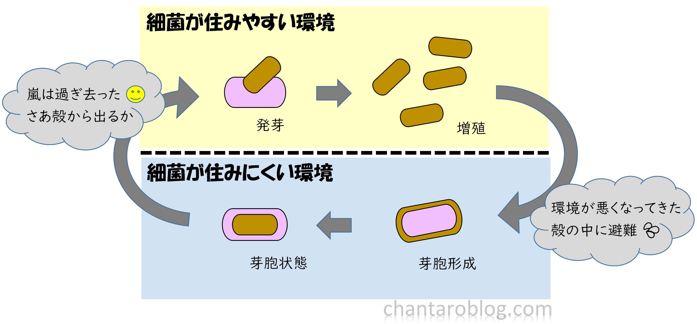 熱に強い芽胞形成菌の説明をしている