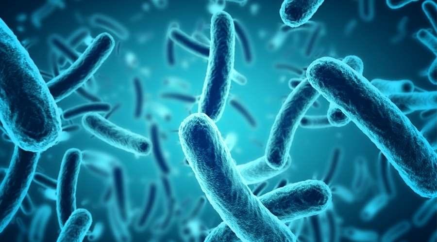 沢山の細菌が繁殖している。