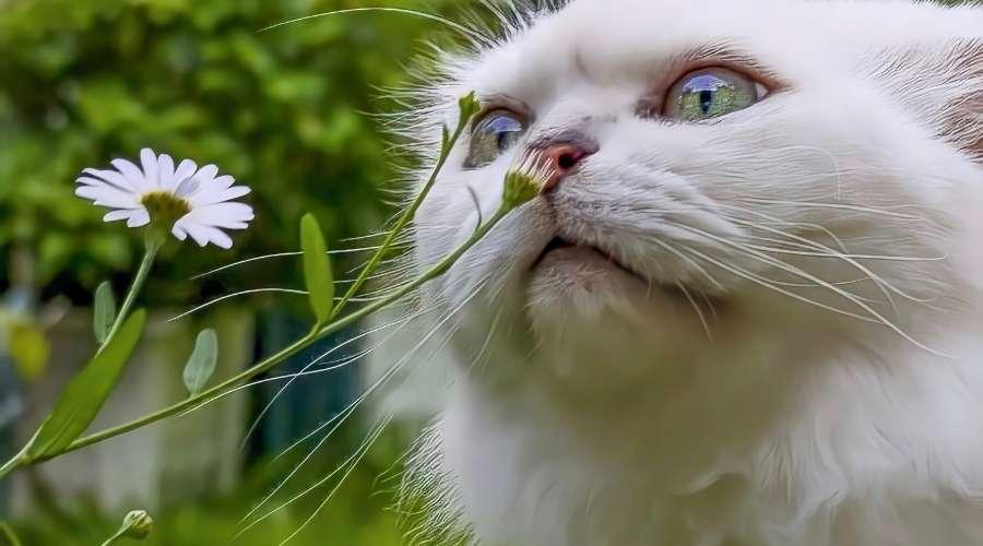 猫が花の匂いを嗅いでいる