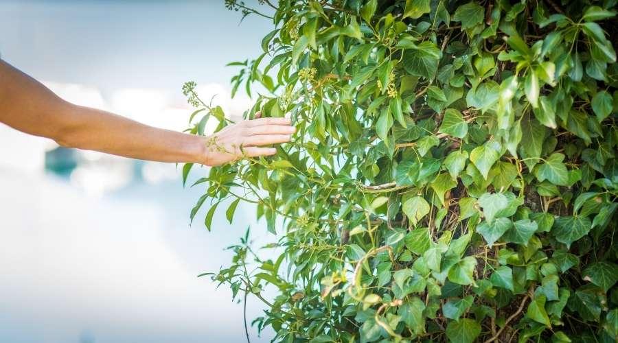 女性が手で緑の葉っぱを触っている。